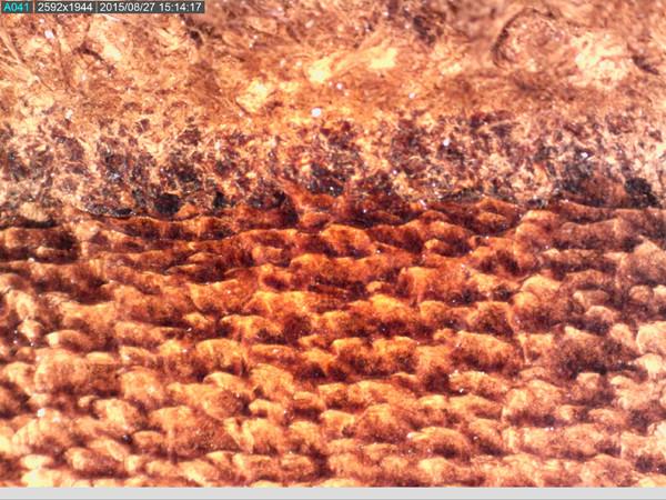43-AM7115MZT-leather_50x.jpg